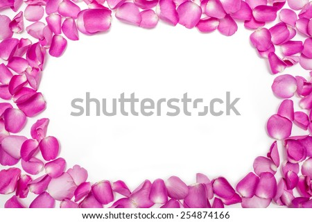 Dark pink rose petals, isolated on white background, closeup, in the middle area is place for sample text - stock photo