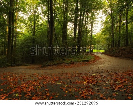 Dark rainy day.  Path leading among the beech trees at near autumn forest surrounded by fog.  - stock photo