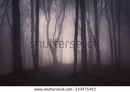 dark spooky forest with old trees on halloween - stock photo