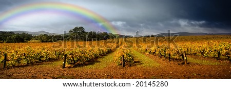 Dark storm clouds loom over vineyard with a rainbow in the background - stock photo