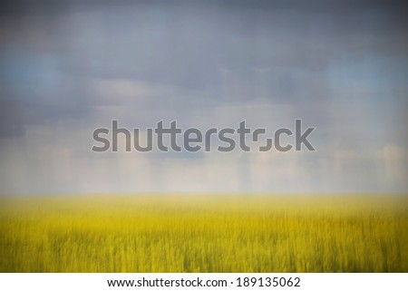 Dark stormy clouds over a green wheat field