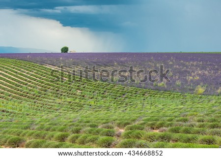 Dark thundercloud and distant rain above a colorful lavender field at Provence - stock photo