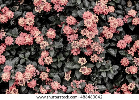 Dark Tone Abstract Of Harmony In Nature Beautiful Colorful Color Black And White Hedge Flower