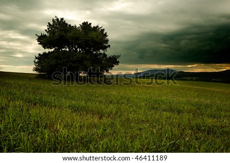 Dark tree against stormy sky