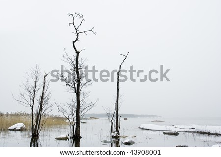Dark trees and icy sea, Finland