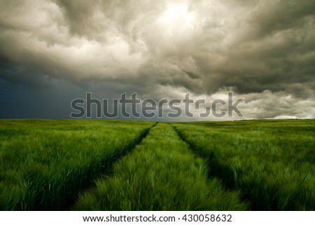 Dark wallpaper with dramatically cloudy sky and green rye field. Photo was taken few minutes before hard storm with flash and rain - stock photo