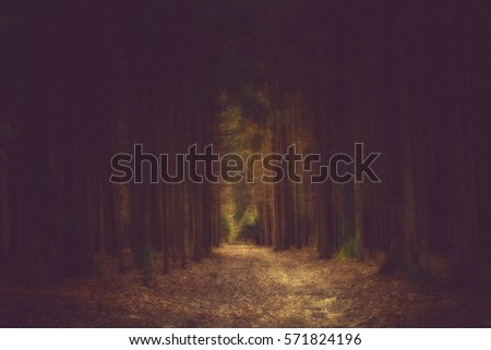 Dark way in the forest