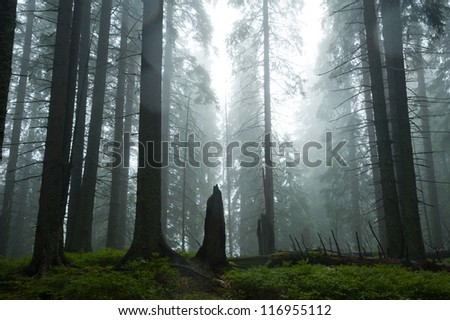 dark wet forest - stock photo