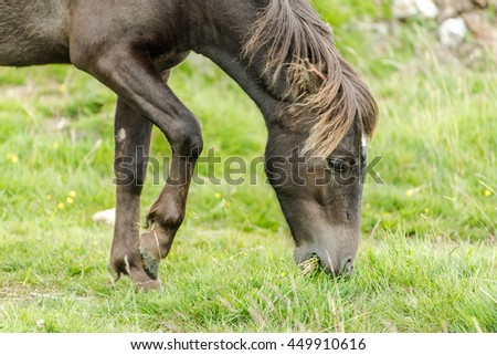 dark wild horse grazing in rural area of countryside