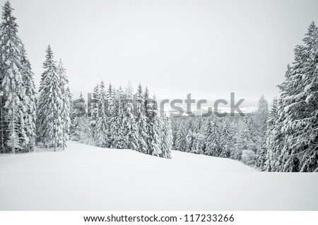 Dark winter landscape with snow covered trees