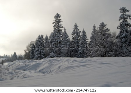 dark winter landscape with snow covered trees  - stock photo