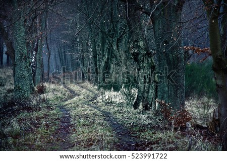 Dark winter path between dead trees. Nature, season specific concept.