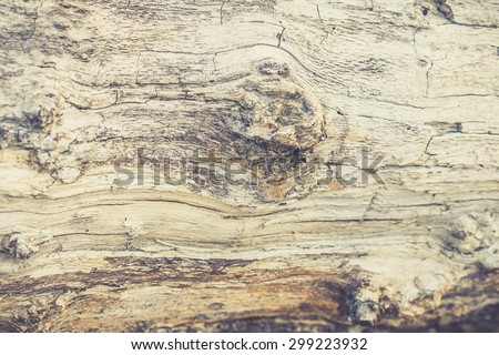 Dark wood texture. Abstract background - stock photo