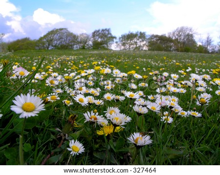 Dasyies and dandelions on grass field - stock photo