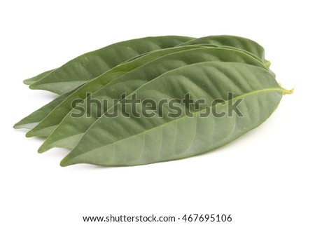 Daun Salam known as the Indonesian Bay Leaf; non sharpened file