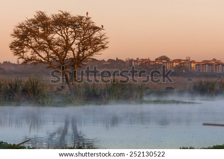 Dawn in Nairobi National Park with buildings in background - stock photo