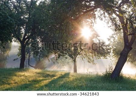 Dawn in the apple garden of Eden - stock photo