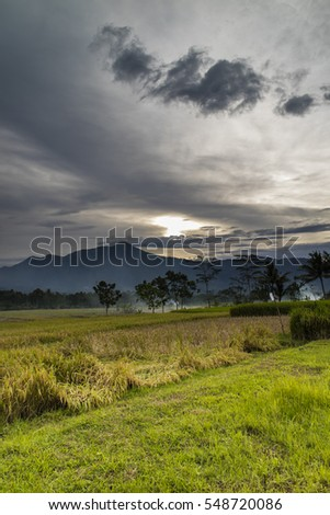 Dawn in the paddy field