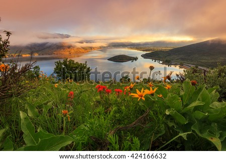 Dawn light with spring wildflowers, Heber Valley, Utah, USA. - stock photo