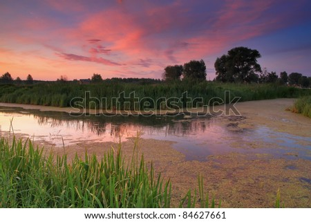 Dawn on the swamp - stock photo