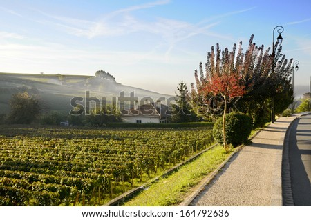 Dawn on vineyards - stock photo