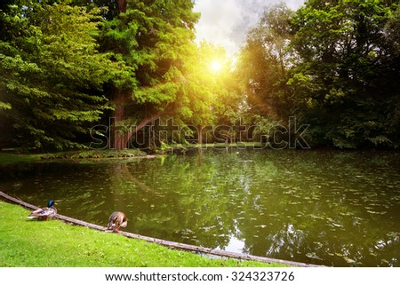 Dawn over small lake in woods - stock photo