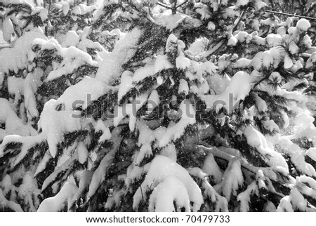 Day after snow storm - stock photo