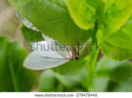 day-flying moth, berry plants  - stock photo