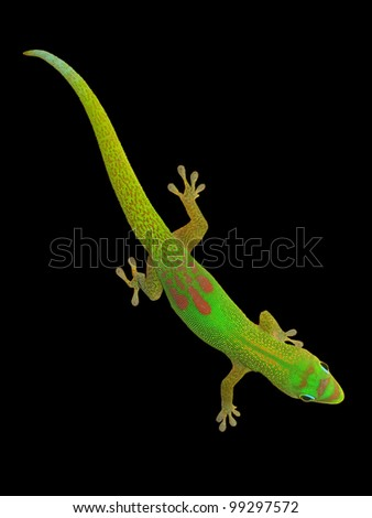 Day gecko isolated on black - stock photo