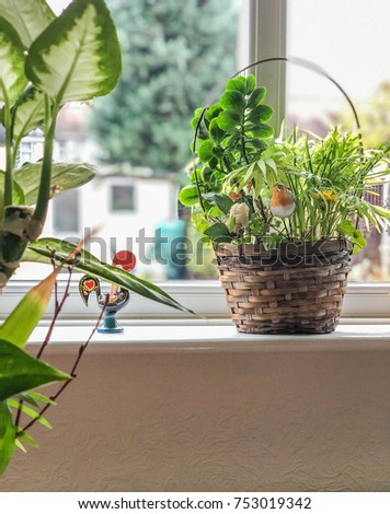 daylight falls onto a planter and living room window sill on a sunny day
