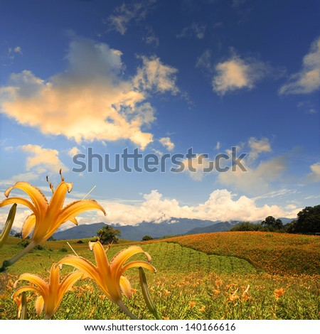 Daylily flower at sixty Stone Mountain in Taiwan for adv or others purpose use - stock photo