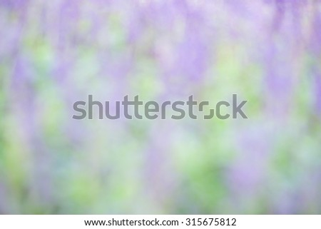 De focused or blurred purple lavender flowers with green leafs for nature background - stock photo