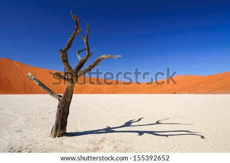 Dead acacia tree in Sossusvlei Pan - Sossusvlei is a salt and clay pan surrounded by high red dunes, located in the southern part of the Namib Desert, in the Namib-Naukluft National Park of Namibia.  - stock photo