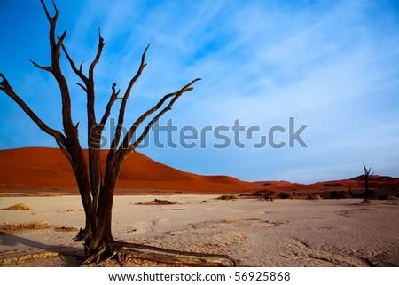 Dead acacia trees in desert, Dead Vlei, Namibia - stock photo