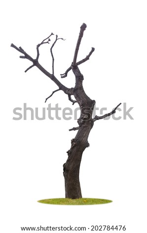 Dead and dry tree, isolated on white background. - stock photo