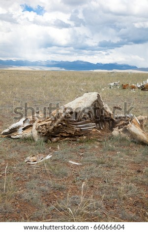 Dead animals in the desert steppe - stock photo