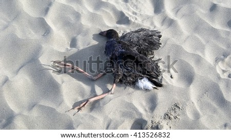 Dead bird on the beach - stock photo