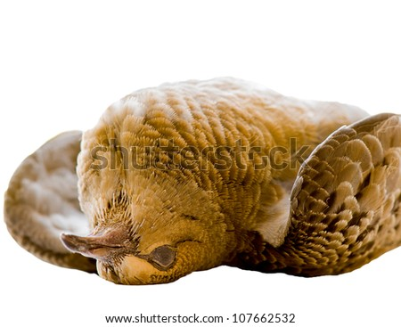 Dead bird on white with clipping mask - stock photo