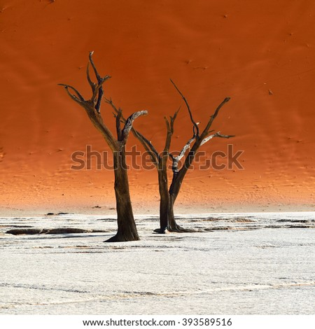 Dead Camelthorn Trees against red dune in Deadvlei, Sossusvlei. Namib-Naukluft National Park, Namibia, Africa