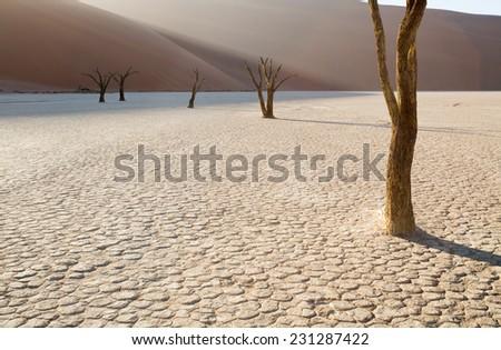 Dead Camelthorn trees at sunrise, Deadvlei, Namib-Naukluft National Park, Namibia - stock photo