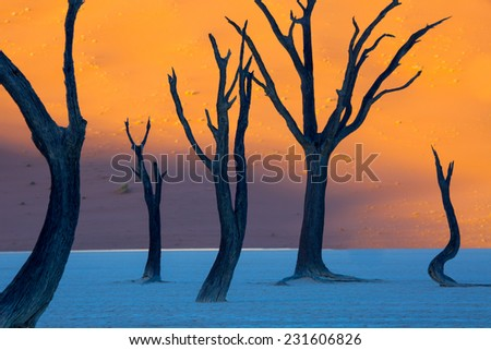 Dead Camelthorn Trees at sunrise, Deadvlei, Namib-Naukluft National Park, Namibia - stock photo