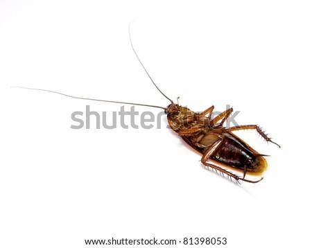 Dead cockroach - stock photo