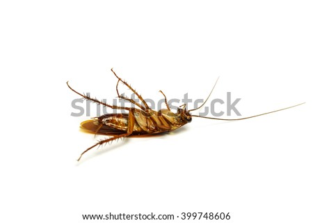 Dead cockroach in white background.
