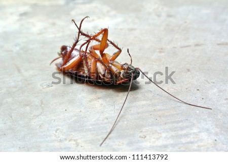 Dead Cockroach isolated on floor - stock photo