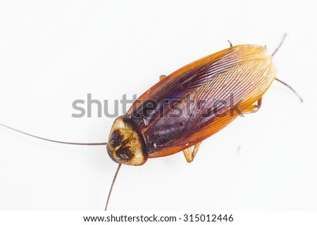 Dead cockroach isolated on white background - stock photo
