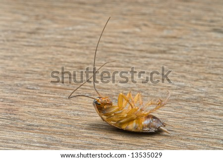 Dead  Cockroach isolated on wooden table - stock photo