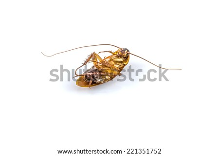 Dead cockroach on a white background