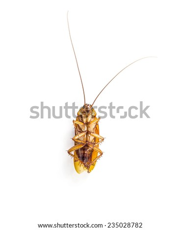 Dead cockroach  on a white background - stock photo