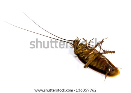 Dead cockroach on white background - stock photo