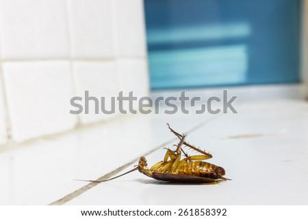Dead cockroach on white tile floor - stock photo
